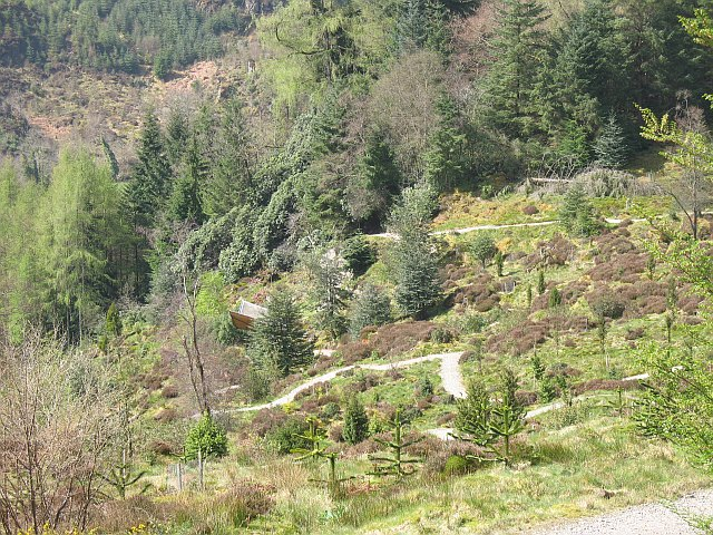 Patagonian forest, Benmore Gardens