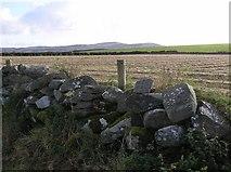 C3121 : Stone wall, Ballymoney by Kenneth  Allen