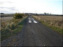 NU2314 : Bridleway to Lesbury by Ian Paterson