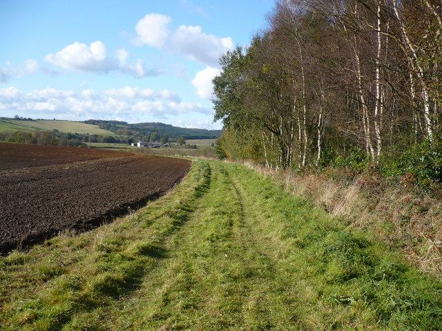 Footpath alongside Seller's Plantation in the Howardian Hills AONB