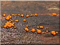 NS3983 : Common Jellyspot Fungus (Dacrymyces stillatus) by Lairich Rig