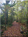 TQ2113 : Hoe Wood, Woods Mill Nature Reserve by Simon Carey