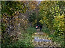 NZ1465 : Autumn colours on railway path near Heddon Haughs by Oliver Dixon