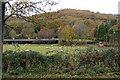 SO5304 : Farm scene in Autumn, Llandogo by Ruth Sharville