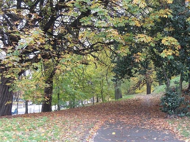 Woodland, London Road