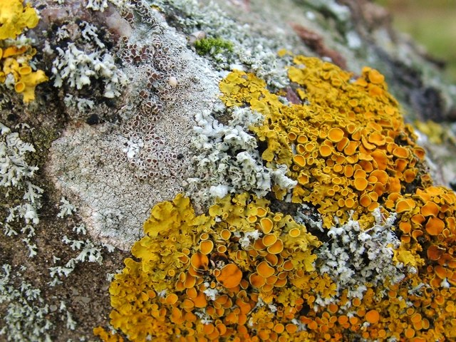 Lichens on a boulder in a disused quarry