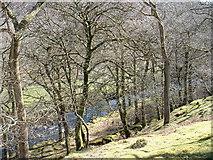 SH6129 : Afon Artro below Crafnant by David Medcalf