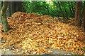 J3067 : Autumn at Dunmurry (3) by Albert Bridge