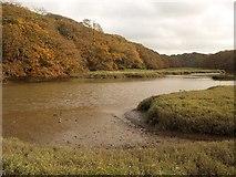 SX4663 : Blaxton Creek by Derek Harper