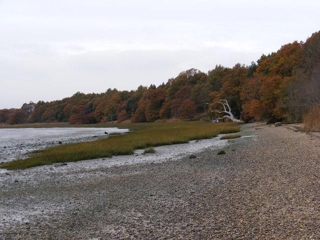 River Orwell Shore
