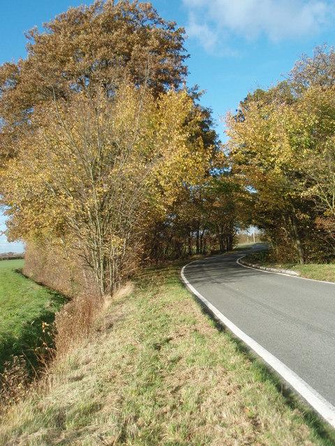 Autumn Trees Towards Buckworth