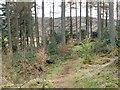 NS3985 : Loop walk (return leg) - through the woods by Lairich Rig