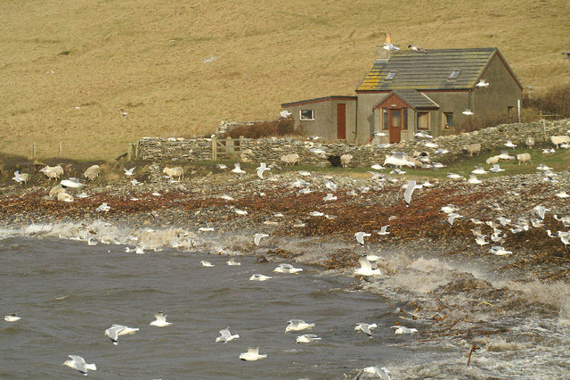 Gulls at the Westing