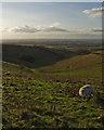 SE9235 : Wye Dale, near South Newbald by Paul Harrop