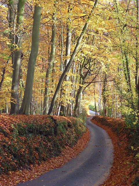 Holloway Lane, Turville