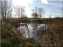 ST1477 : Pond in Fairwater Park by John Carter