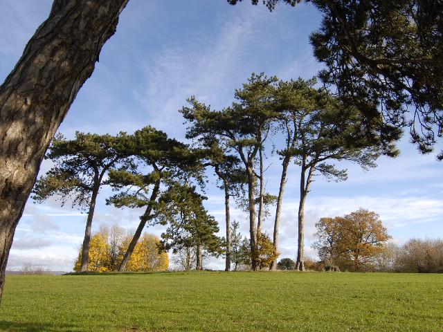 Trees in Fairwater Park