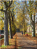 SU7273 : Chestnut Walk, Reading by Andrew Smith