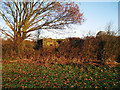 TQ8226 : Pill Box near Newenden by Oast House Archive