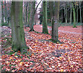 TG3131 : A carpet of leaves by Evelyn Simak