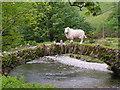 NY1808 : Sheep on a small bridge near Wasdale Head. by N Chadwick