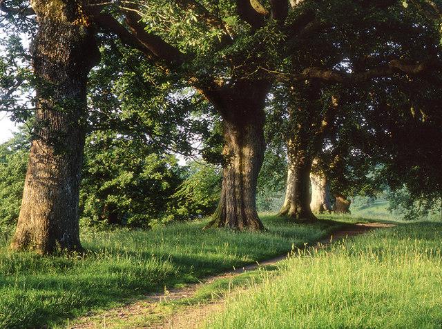 Path through Levens Park
