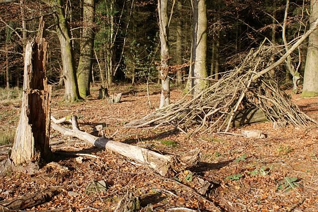 Kids' play camp in woods, Forest of Dean