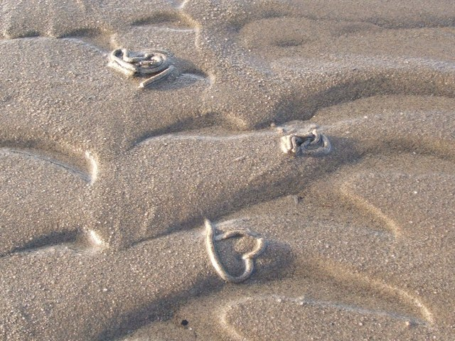 Wormcasts at low tide