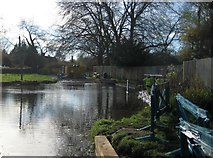 SU7251 : River Whitewater in Warnborough Green by Nigel Cox