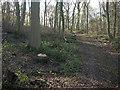 TL6554 : Sparrows Grove by Hugh Venables