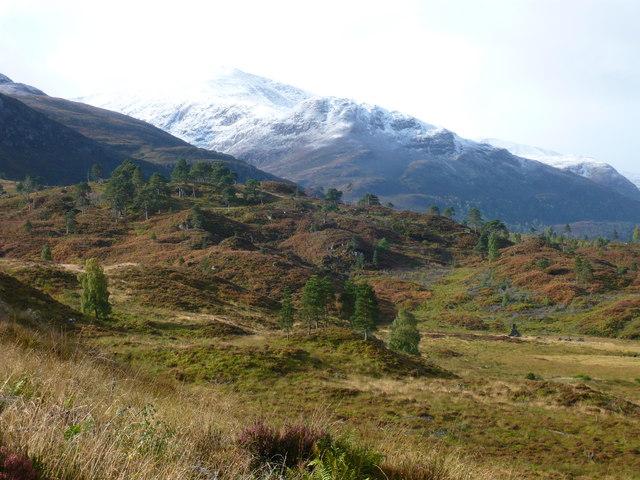 Native forest regeneration on the south side of Glen Cannich near Loch Mullardoch dam. by Rob Pedley
