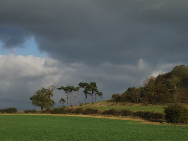 Trees on Colborough Hill