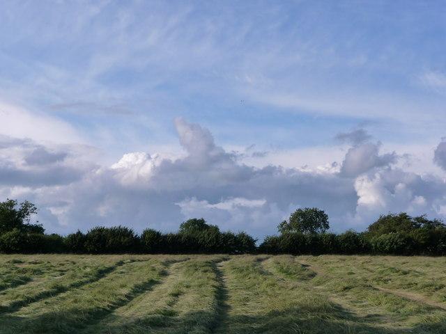 Cut field before baling