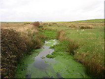 SH3368 : Heavily-vegetated slow-moving stream viewed from a path footbridge by Eric Jones