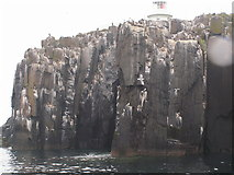 NU2135 : Cliff below the lighthouse, Inner Farne by N Chadwick