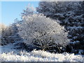 NC5222 : Frosty morning by sylvia duckworth