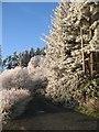 NT1940 : Beggarpath Wood by Richard Webb
