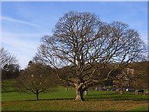 SU8695 : Hughenden Park by Andrew Smith