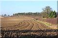 TL6055 : Field near Chalk Pit Farm by Bob Jones