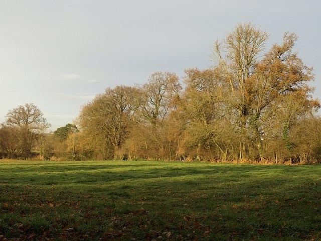 Field by Goblin Lane
