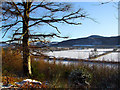 NN7922 : Trees beside the old Lawers West Drive by Dr Richard Murray