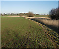 TL3761 : Uncultivated buffer by Hugh Venables
