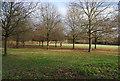 TQ5939 : Victoria Cross Grove, Dunorlan Park (2) by N Chadwick