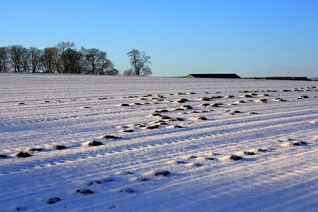 Moleholes in the Snow