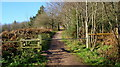 SO7020 : Well worn track up to May Hill. by David Robinson