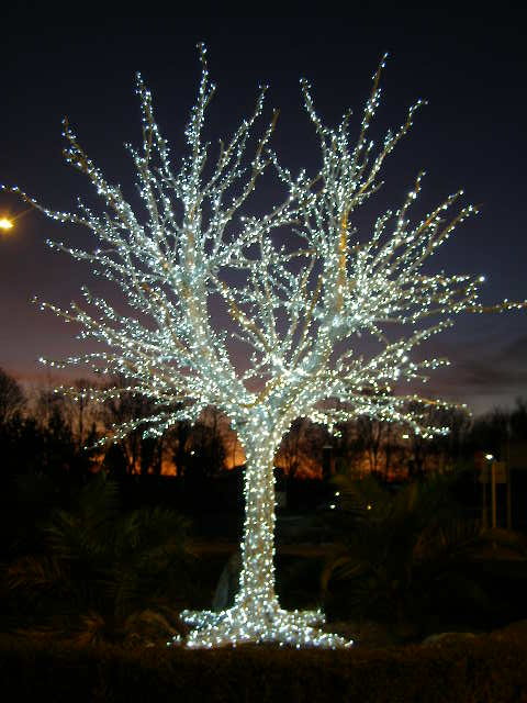 Man-made tree of lights - Entrance to Springfields
