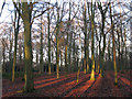 TQ4677 : Late afternoon sunshine in Bostall Woods by Stephen Craven