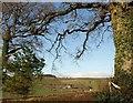 SX7765 : Trees frame the view by Derek Harper
