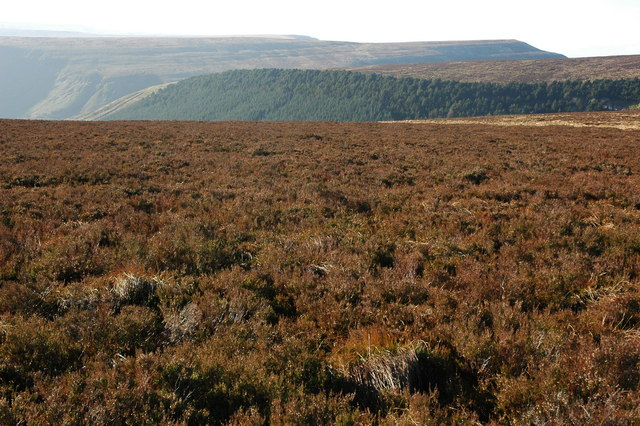 Rough heather covering moorland