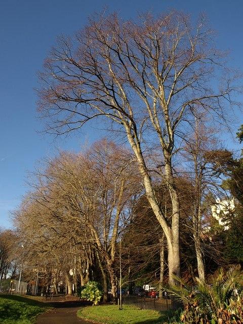 Trees, Upton Park